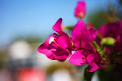 Bei fiori tropicali Immagini Stock Libere da Diritti