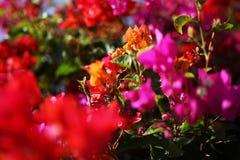 Bei fiori tropicali Immagini Stock