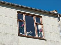 Bei fiori in un vaso dalla finestra Fotografia Stock Libera da Diritti