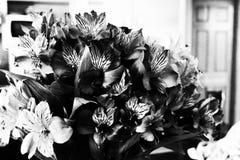 Bei fiori usati per la decorazione in bianco e nero Fotografie Stock