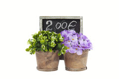 Bei fiori variopinti Fotografia Stock Libera da Diritti