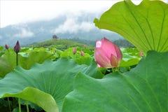 Bei fiori variopinti dell'iride e del tulipano fotografia stock