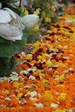 Bei fiori variopinti nel giorno di Makabusha Fotografia Stock Libera da Diritti