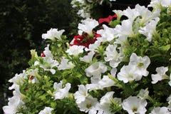 Bei fiori variopinti nel parco della città sul prato inglese fotografie stock libere da diritti