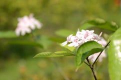 Bei fiori variopinti vibranti nella primavera Fotografia Stock