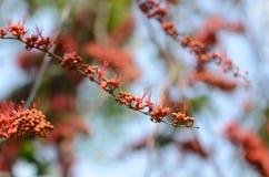 Bei fiori variopinti vibranti nella primavera Immagine Stock Libera da Diritti