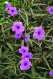 Bei fiori variopinti vibranti nella primavera Fotografia Stock Libera da Diritti