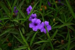 Bei fiori variopinti vibranti nella primavera Immagini Stock