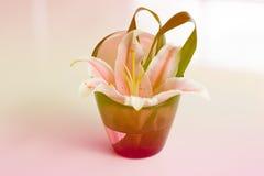 Bei fiori in vaso Fotografia Stock