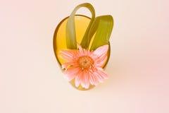 Bei fiori in vaso Fotografie Stock Libere da Diritti