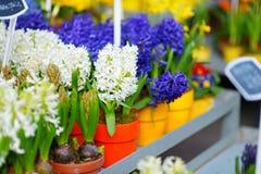 Bei fiori venduti sul negozio di fiore all'aperto Immagine Stock
