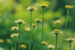 Bei fiori verdi Immagini Stock Libere da Diritti