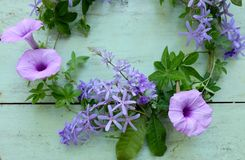 Bei fiori viola Immagine Stock