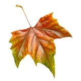 Bei fogli in autunno Fotografia Stock Libera da Diritti