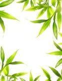 Bei fogli del bambù immagini stock