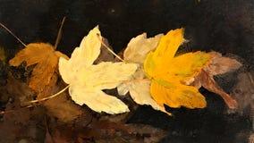 Bei fogli di autunno Fotografia Stock Libera da Diritti