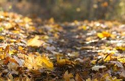 Bei fogli di autunno Fotografia Stock