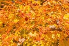 Bei fogli di autunno Immagini Stock