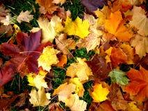 Bei fogli di autunno Immagini Stock Libere da Diritti