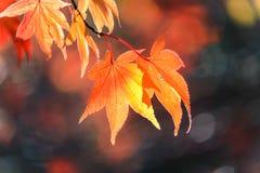 Bei fogli di autunno Immagine Stock Libera da Diritti
