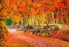 Bei fogli di autunno variopinti Vista meravigliosa fotografia stock