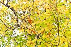 Bei fogli verdi e gialli Fotografie Stock