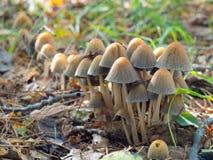 Bei funghi in foresta immagine stock libera da diritti