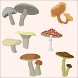 Bei funghi messi Stile piano Immagine Stock Libera da Diritti