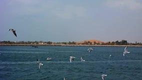 Bei gabbiani che sorvolano la spiaggia archivi video