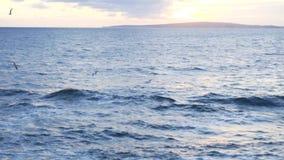 Bei gabbiani volanti sopra le ondulazioni del mare blu contro il cielo nuvoloso azione Vista sul mare minima con bianco stock footage