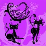 Bei gatti. Immagine Stock