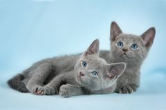 Bei gatti Fotografia Stock Libera da Diritti