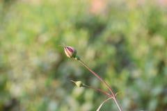 Bei germogli in un giardino Fotografia Stock