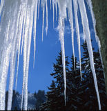 Bei ghiaccioli Fotografia Stock