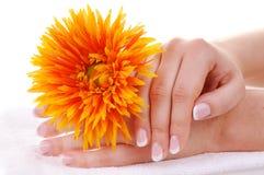 Bei manicure francese e fiore Fotografia Stock Libera da Diritti