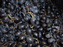 bei mazzi dell'uva blu matura fresca, fine su, l'agricoltura rispettosa dell'ambiente, è utile per salute immagine stock