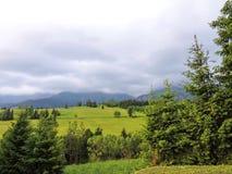 Bei montagna e campi con le piante in Slovacchia Fotografia Stock