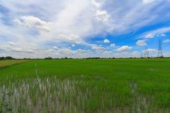 Bei paesaggi con le risaie ed il cielo blu fotografie stock libere da diritti
