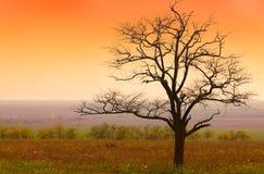 Bei paesaggio ed alba Immagini Stock