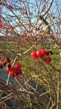 Bei paesaggio ed alberi Fotografie Stock Libere da Diritti