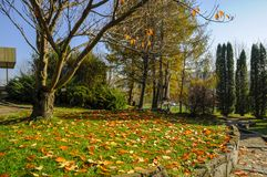 Bei parchi verdi per rilassamento fotografia stock