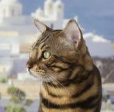Bei pari del gatto nel lato immagine stock libera da diritti