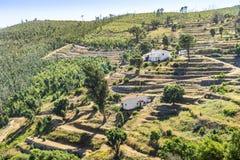 Bei pendii a terrazze in Monchique, Algarve, Portogallo fotografia stock