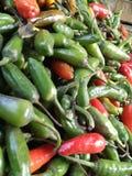 Bei peperoncini rossi Fotografia Stock