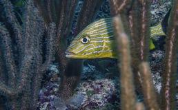 bei pesci tropicali Immagine Stock Libera da Diritti