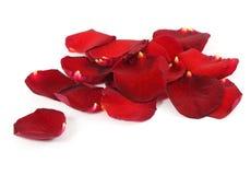 Bei petali di rose rossi Fotografie Stock Libere da Diritti