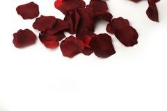 Bei petali di rose rossi Fotografia Stock Libera da Diritti