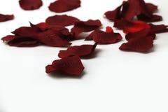 Bei petali di rose rossi Fotografie Stock