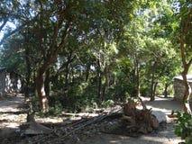 Bei piante ed alberi immagine stock libera da diritti