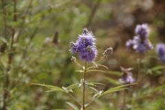Bei piccoli fiori che rappresentano la bellezza della natura fotografie stock libere da diritti